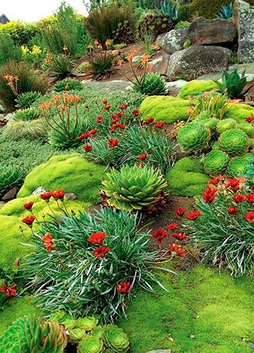 Каменистый сад